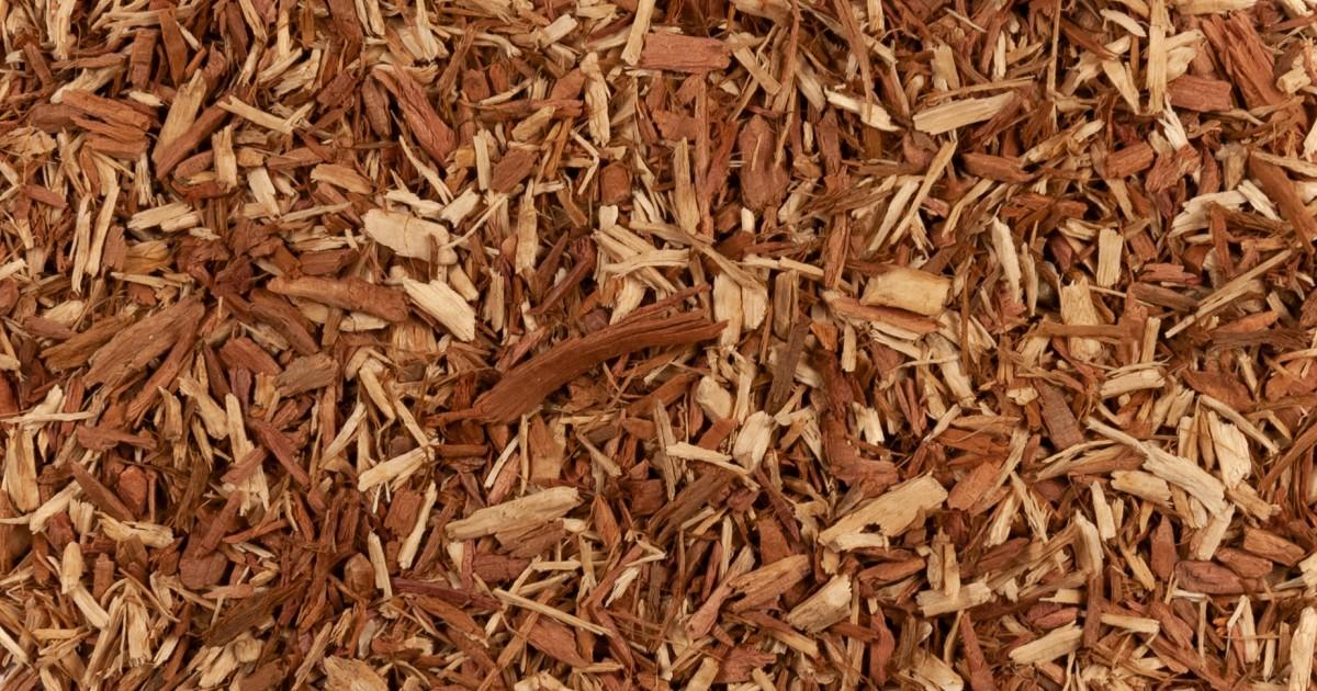 Cedar Wood, Red