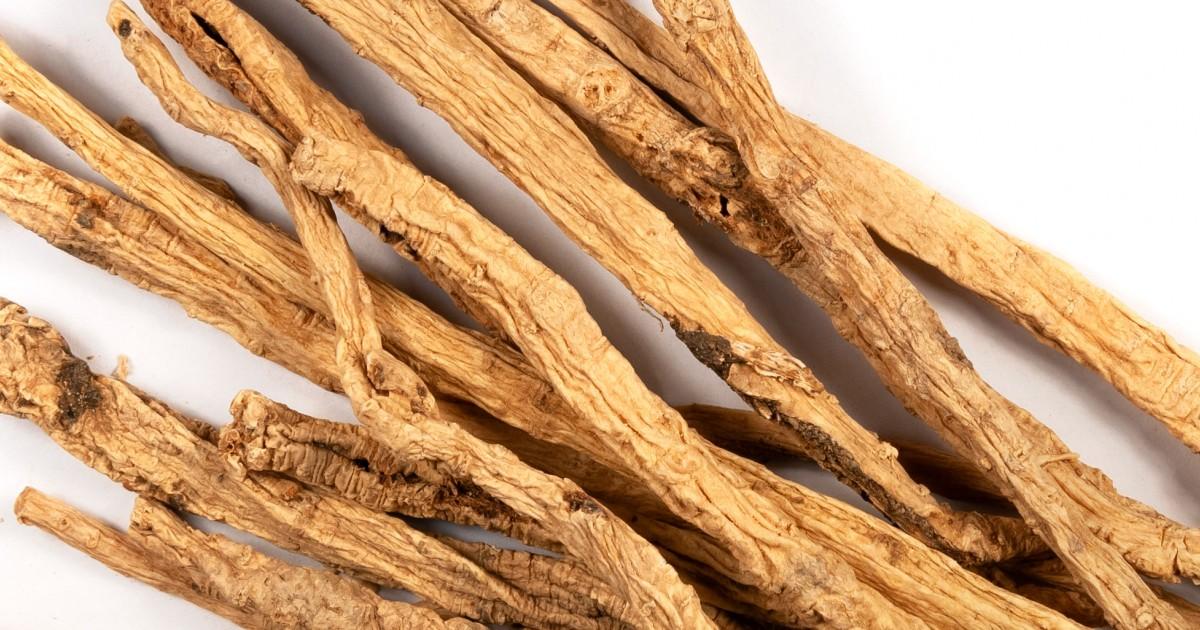 Codonopsis
