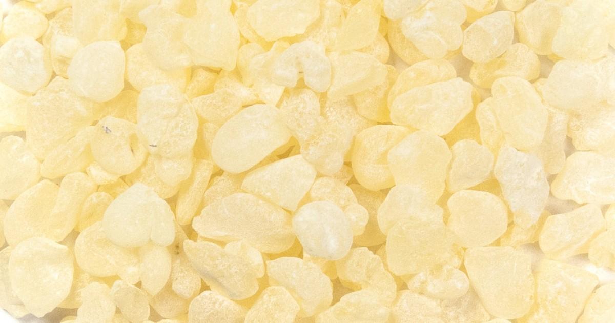 Mastic Gum of Chios