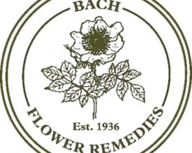Elm, Back Flower Remedy, 20ml