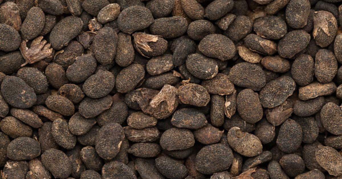 Bakuchi Seed Oil