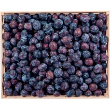 Blackthorn Berry
