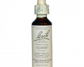 Gorse, Bach Flower Remedy, 20ml